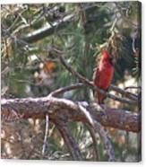 The Cardinal Canvas Print