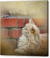 The Cat And The Mouse Canvas Print