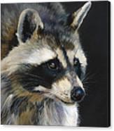 The Cat Food Bandit Canvas Print