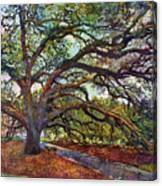 The Century Oak Canvas Print