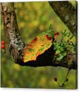 The Changing Season Canvas Print