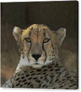 The Cheetah Canvas Print