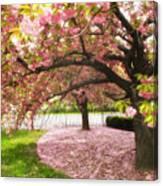 The Cherry Tree Canvas Print