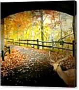 Under The Cobble Stone Bridge Canvas Print