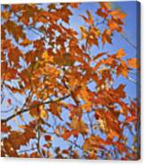 The Color Of Fall 2 Canvas Print