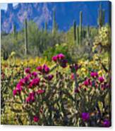 The Colorful Desert  Canvas Print