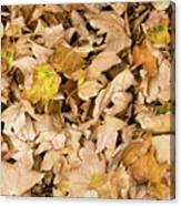 The Colors Of The Leaves In Autumn Canvas Print