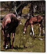 the Colt Canvas Print