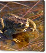 The Common Toad 1 Canvas Print