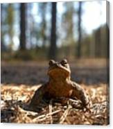 The Common Toad 3 Canvas Print