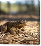 The Common Toad 4 Canvas Print