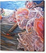 The Conchman Canvas Print