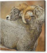 The Conquest - Bighorn Sheep Canvas Print