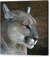 The Cougar Canvas Print