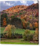 The Cows Are In The Dell  Canvas Print
