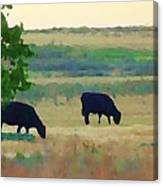 The Cows Next Door Canvas Print