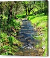 The Creek Canvas Print