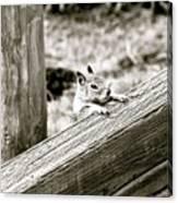 The Curious Squirrel Canvas Print