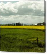 The Curve Of A Mustard Crop Canvas Print