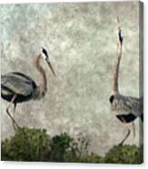The Dance Of Life - Great Blue Herons In Mating Ritual - Digital Painting Canvas Print