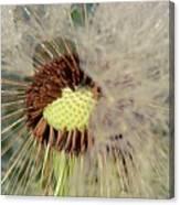 The Dandelion Nucleus Canvas Print