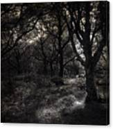 The Deep Forest Canvas Print