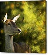 The Deer Canvas Print