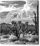 The Desert Speaks Canvas Print