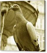 The Dove Canvas Print