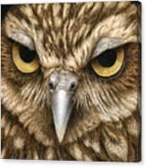 The Dubious Owl Canvas Print