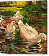 The Duck Pond At Botanical Gardens Canvas Print