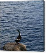 The Duck Canvas Print