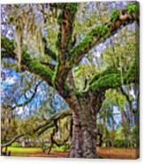 The Dueling Oak 2 Canvas Print