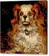 The Duke Of Marlborough. Portrait Of A Puppy Canvas Print
