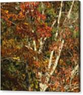 The Dying Leaves' Final Passion Canvas Print