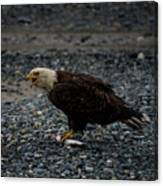 The Eagle And Its Prey Canvas Print