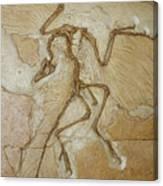 The Earliest Bird, Archaeopteryx Canvas Print