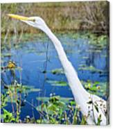 The Egret And The Dragonfly Canvas Print