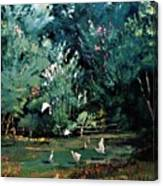 The Egrets Have Landed Canvas Print