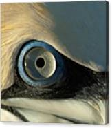 The Eye Of A Northern Gannet Canvas Print