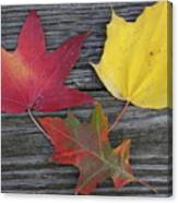 The Fallen Leaves Of Autumn Canvas Print