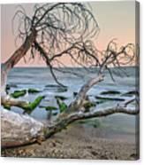 The Fallen Tree Canvas Print