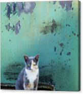 The Ferals-1420 Canvas Print