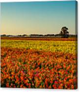 The Field Of Flowers Canvas Print