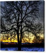 The Field Tree Hdr Canvas Print