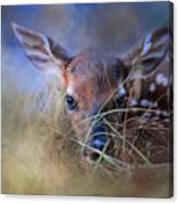 The First Fawn Canvas Print