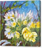 The First Flowers After Winter Canvas Print