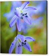 The First Spring Flowers Canvas Print
