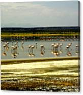 The Flamingoes Canvas Print