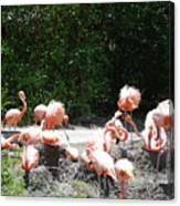 The Flamingos Canvas Print